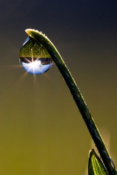super cool! everything is upside down in the dew drop!
