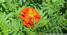 #alabama #alabamaparks #alabamafindings #green #beautiful #beauty #professional #professionalpictures #pictures #photo #nature #bushes #hannahhansenphotography #naturephotography #leaves #love #nature #flowers #flower #orange #orangeflower