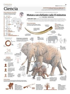 An elephant is killed every 15 minutes