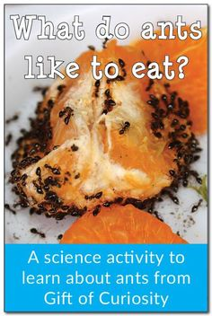 fourmis : What do ants like to eat? A science activity for kids to learn about ants Insect Activities, Science Activities For Kids, Preschool Science, Science Fair, Science For Kids, Science Experiments, Easy Science, Spring Activities, Preschool Kindergarten