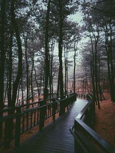 floresta por MyohoDane