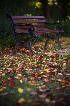 Lonely bench in the fallen leaves Nature Verte, Raindrops And Roses, Autumn Garden, Autumn Inspiration, Fall Season, Autumn Leaves, Autumn Harvest, Beautiful Places, Scenery