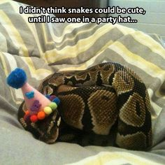 You thought snakes couldn't be cute