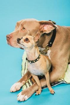 Meet The 8 Cutest Dogs In L.A.  #refinery29  http://www.refinery29.com/most-eligible-dogs-in-la#slide-11  Hank