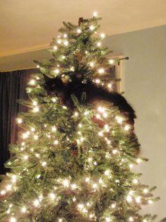 Cats Who Love Christmas Trees