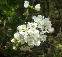 Early May Flowers  May 14, 2016 by New Hampshire Garden Solutions