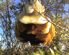 This beehive at South Fork State Park may hold lots of tasty honey but if you get too close, the bees are sure to sting!
