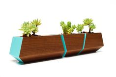 Revolution Design House - Boxcar Set Walnut and Blue - Walnut Boxcar succulent planter set with a clear finish and a pop of Robin Egg blue accents. Nest the set of planters together along a window sill or as a centerpiece on a table or desk. Wooden Planters, Indoor Planters, Planter Pots, Succulent Planters, Plant Box, Modern Patio, Flower Boxes, Flower Stands, Walnut Wood