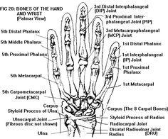 Die Hände  Zum Greifen Tasten und Kommunizieren