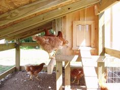 Chicken coop step by step - lots of details!