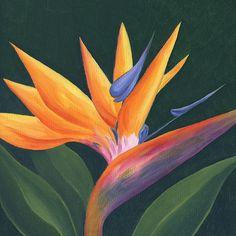 43 Ideas Bird Of Paradise Painting Acrylics Bird Of Paradise Yoga, Bird Of Paradise Tattoo, Birds Of Paradise Plant, Paradise Painting, Tropical Art, Plant Art, Bird Drawings, Acrylic Painting Canvas, Canvas Art