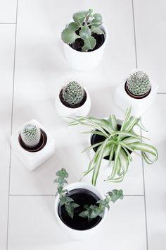 Scandinavian • Plants • White • Sukkulenten • Cactus • Marmor • Green