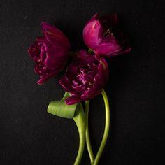 Pauline (@cloverhome.nl) • Instagram-foto's en -video's Tulip Season, Enjoy It, Tulips, Seasons, Canning, Rose, Flowers, Plants, Blog
