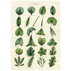 Botany print