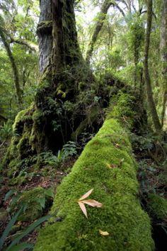 Lamington National Park, Queensland, Australia