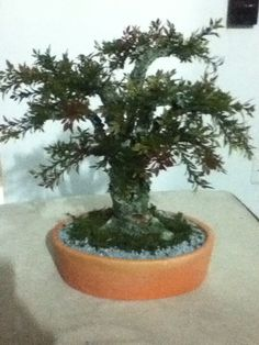 Bonsai artificial de olivo