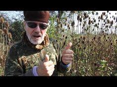 Dědek kořenář a štětka lesní - YouTube Wayfarer, Ray Bans, Mens Sunglasses, Herbs, Youtube, Style, Fashion, Swag, Moda