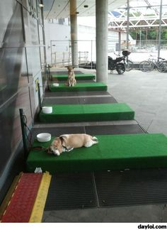 Dog parking in front of IKEA - DayLoL.com - Your Daily LoL!