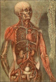 Anatomie des parties de la génération de l'homme et de la femme    Paris, 1773. Colored mezzotint. National Library of Medicine.    Jacques Fabien Gautier D'Agoty  (1717-1785)