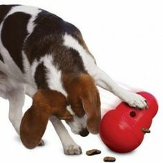 Dog Games - The Kong Wobbler Treat Dispensing Dog Toy *This is how Midnight gets her breakfast! Hamsters, Chat Royal, Kong Treats, Croquettes Chat, Jouet Kong, Female Dog In Heat, Dog Presents, Dog Puzzles, Kong Toys