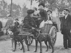 Belgian refugees flee via dog cart, 1914