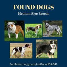 Please RT. #Found #dogs #lmediumbreed #aussie #beagle #bulldog #mixedbreed #missing #Sarasota #ManateeCounty #Bradenton http://bit.ly/2ioc8sw