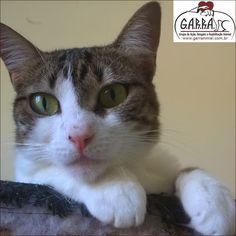 G.A.R.R.A. - Grupo de Ação, Resgate e Reabilitação Animal: Adote a Gigi - Ajude o Ezequiel!