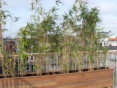 €350/m op dakterraswinkel.nl    materiaal, planten, installatie