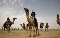 Vården vågar inte rapportera om kvinnlig könsstympning - Kvartal Camels, Hadith, Anthropology, Muslim, Om, Animals, Animales, Animaux, Anthropologie