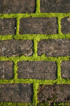 Captivating Athelhampton House And Gardens. Dorset. Lush Moss On Our Brick  Path.www.athelhampton.co.uk