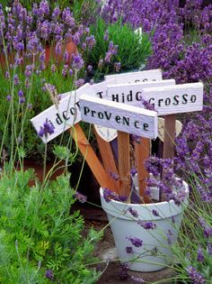 HOW TO; Garden Tips for Growing Lavender Hints for growing lavender plants in your garden.
