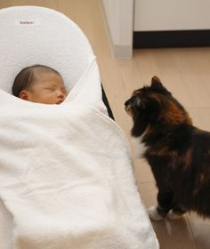How to Introduce Your Cat to a New Baby | PawNation