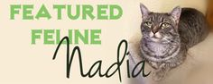Nadia is a sweet kitty that loves to sit on your lap and be petted. She is looking for a family with no other pets to give all of her affection to...