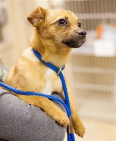 Erik The Red is a little Chihuahua mix dog. Little Erik was found by good Samaritans on the side of a country road in a carrier. They brought him to East Lake Pet Orphanage (ELPO) and though he was scared and shy at first he's now learning that he's in a safe place.