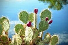 Cuidados básicos para los cactus