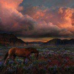 . Vaquero. Photography by @ (Kittiya Pawlowski). Wildflowers resurrect from the iron-rich crimson soil of the desert after prolonged periods of no rain. The sweet aroma of sage carries in the wind as a wild horse treads ahead of approaching storms. #dusk #wildflowers #usa #desert #utah #horse #nature #wild #storm