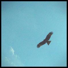 かっこいい鳥2 熱海 Atami 静岡