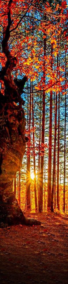 Sunset in the forest, Autumn