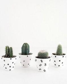 25 maneiras DIY simples para personalizar e pintar vasos de terracota Succulent Pots, Planting Succulents, Potted Plants, Mini Plants, Plants Indoor, Cactus Vert, Mini Cactus, Small Cactus, Cactus Cactus