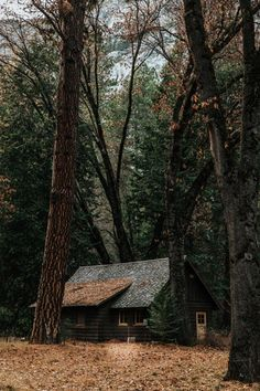 gray wooden house surrounded by trees photo – Free House Image on Unsplash Forest Cabin, Forest House, Lost In The Woods, Cabins In The Woods, Cabana, Royal Garden, Autumn Photography, Wooden House, Photo Tree