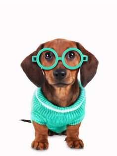 16 Adorable Photos of Dogs Wearing Glasses - BlazePress