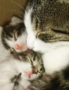 """""""A Mother's arms are full of love and children sleep sweetly within them."""" --Victor Hugo"""