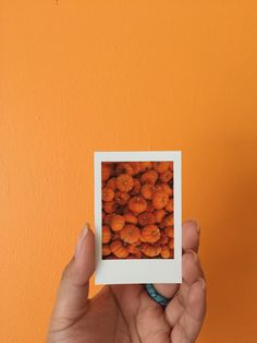 Picture in picture Poloroid Camera, Polaroid Instax, Polaroid Pictures, Polaroid Ideas, Fall Pictures, Colorful Pictures, Orange Aesthetic, Mini Canvas Art, Bullet Journal Art
