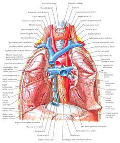 Pulmonary Artery Function (MPA)