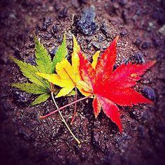 #Rasta Fall Leaves