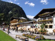 Shopping tour through city center in Mallnitz Tauern National Park Zell Am See, Carinthia, Austria, Places Ive Been, Dolores Park, Tours, City, Amazing, Pictures