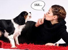 ¿Sabes el Motivo Por Cual Ladra Tu Perro? ¿Te Gustaría Evitar el que Ladre Excesivamente? OBSERVA CON ATENCIÓN LO SIGUIENTE: El problema más común de las personas respecto a su perro son los ladrid…