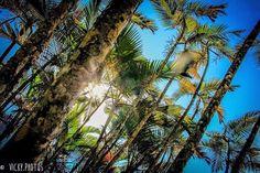 """""""Pra hoje:  Sorrisos bobos,  Uma mente tranquila, Um coração cheio de paz."""" #diadesol @vickyphotos @vicky_photos_infantis https://www.facebook.com/vickyphotosinfantis http://websta.me/n/vicky_photos_infantis https://www.pinterest.com/vickydfay https://www.flickr.com/vickyphotosinfantis"""
