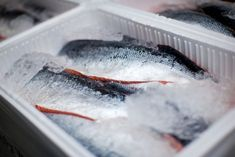 Find Whole Salmons Lying On Ice Transportation stock images in HD and millions of other royalty-free stock photos, illustrations and vectors in the Shutterstock collection. Salmon, Photo Editing, Food And Drink, Stock Photos, Fish, Image, Transportation, Box, Supply Chain