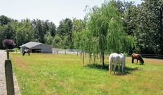 The best way to maintain pastures is to create paddocks or runs  where you can keep horses when the grass needs a rest.